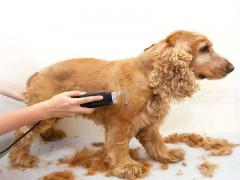Evcil Hayvan Kedi Köpek Tüy Kesme Tıraş Makinesi Mepol